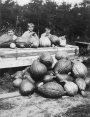 Robinson Children with Pumpkins or Gourds